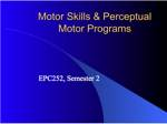 Motor Skills and Perceptual Motor Programs
